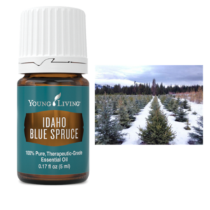 Idaho Blue Spruce